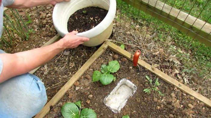 борьба со слизнями на садовом участке способы