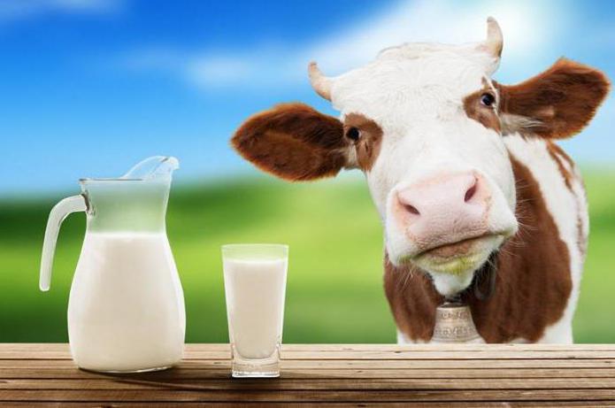 подкормка огурцов йодом и молоком