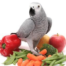 как правильно кормить попугая