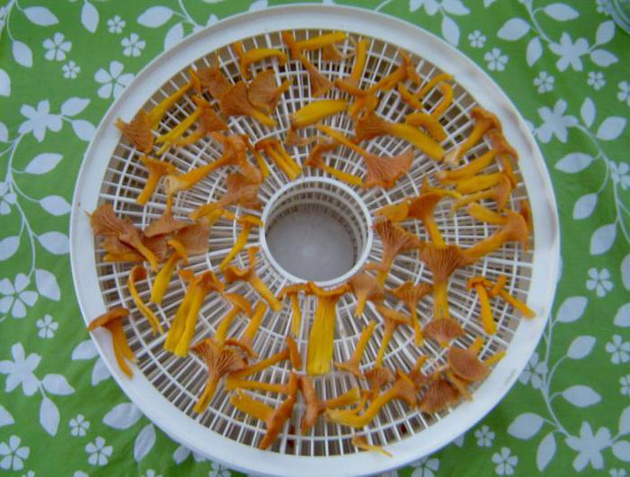 как правильно сушить грибы лисички
