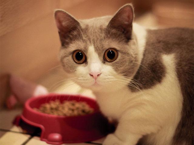 как переводить кошку на другой сухой корм