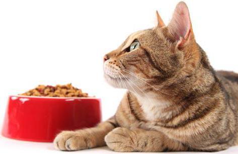 как правильно перевести кошку на другой корм