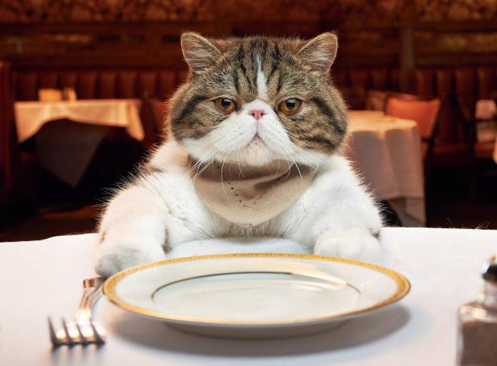 как перевести кошку с одного на другой корм