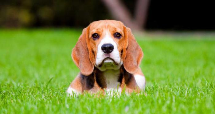 корм для собак консервы отзывы
