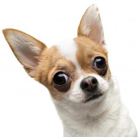 самые качественные консервы для собак