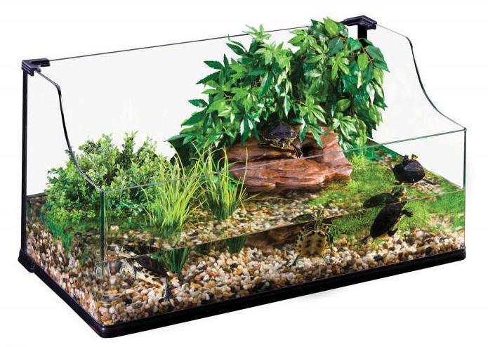Островок для черепахи из камней своими руками 45