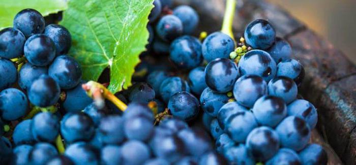Можно ли есть виноград при похудении