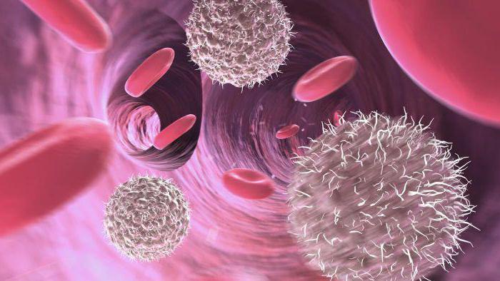 mid в анализе крови повышен