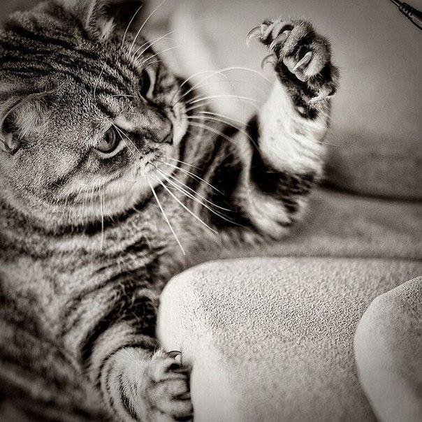 Процедура удаления когтей у кошки отзывы