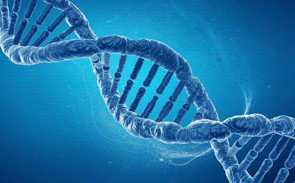 мутации генов гемостаза