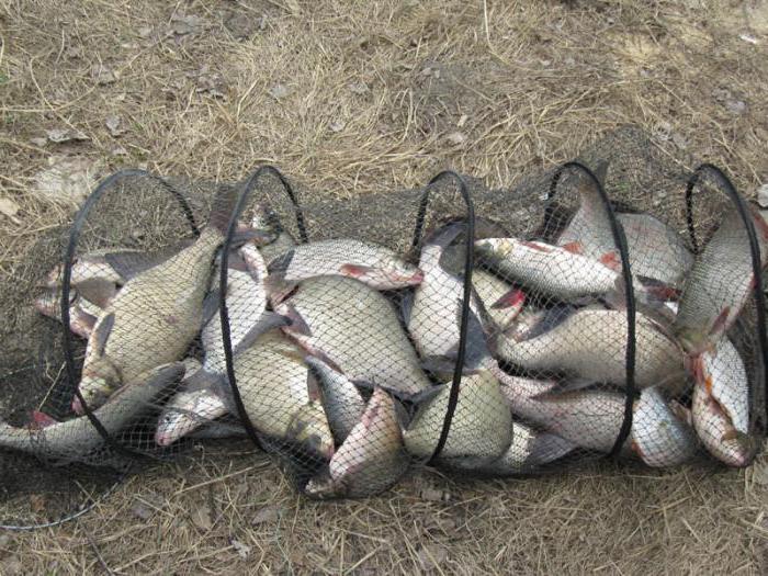 ловить рыбу руками видео
