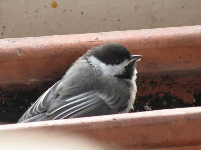 На балкон залетела птица. примета, которую нужно правильно и.