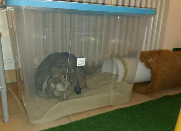 лучшие игрушки для декоративных кроликов