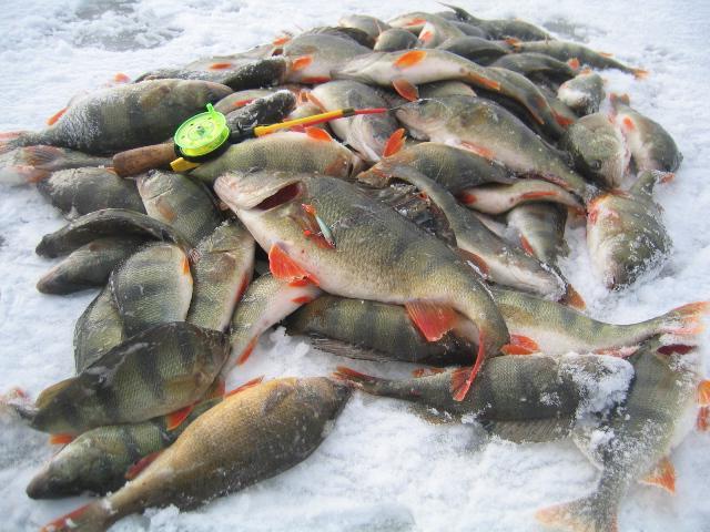 рыболовная база вблизи астрахани