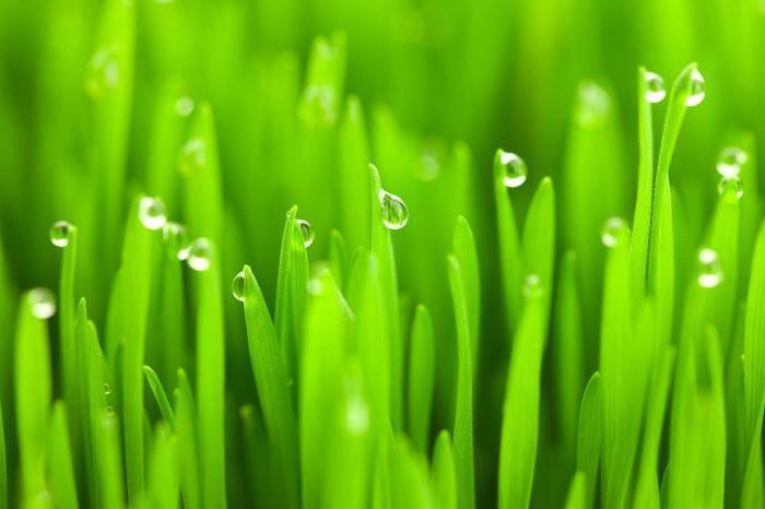 растения мезофиты