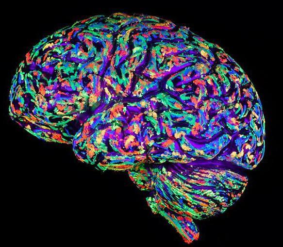 свойства памяти в психологии