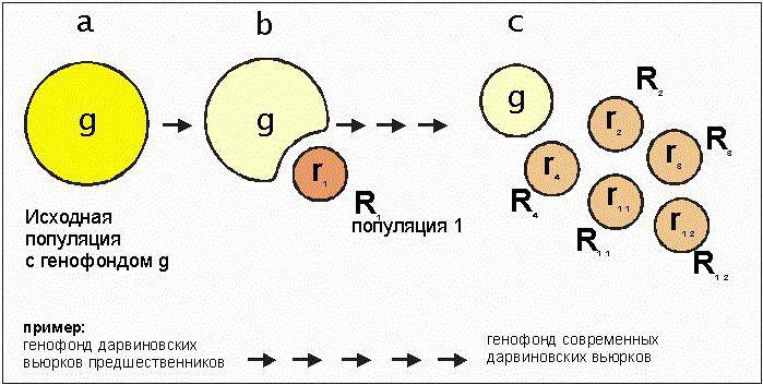 изменение генофонда популяций урок 11 класс