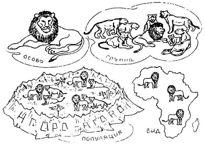 изменения генофонда популяций 11 класс
