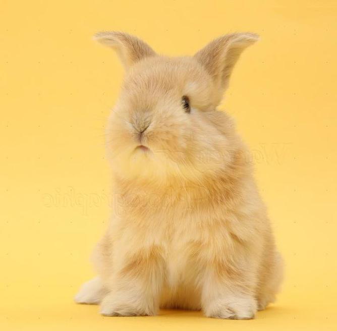 1999 год желтого земляного кролика