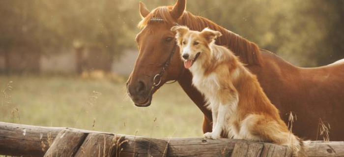 мужчина собака женщина лошадь