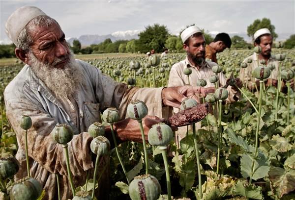Афганистан ввп на душу населения