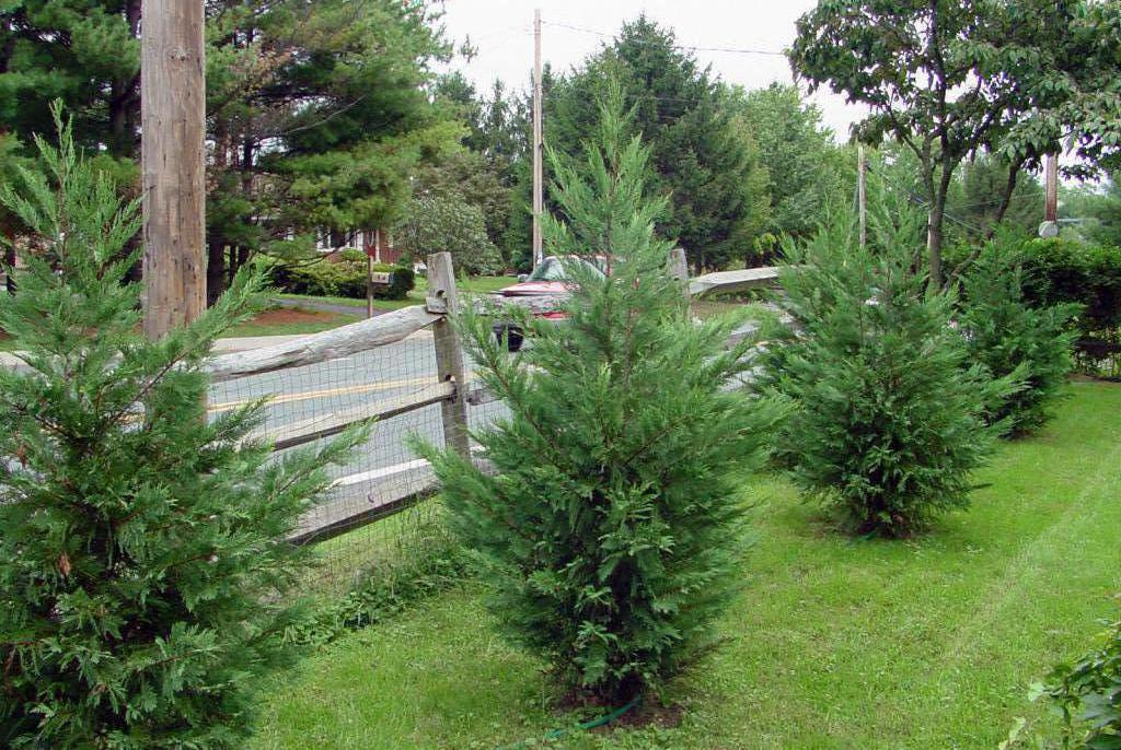 Соблюдайте нормы СНиП при посадке деревьев на участке