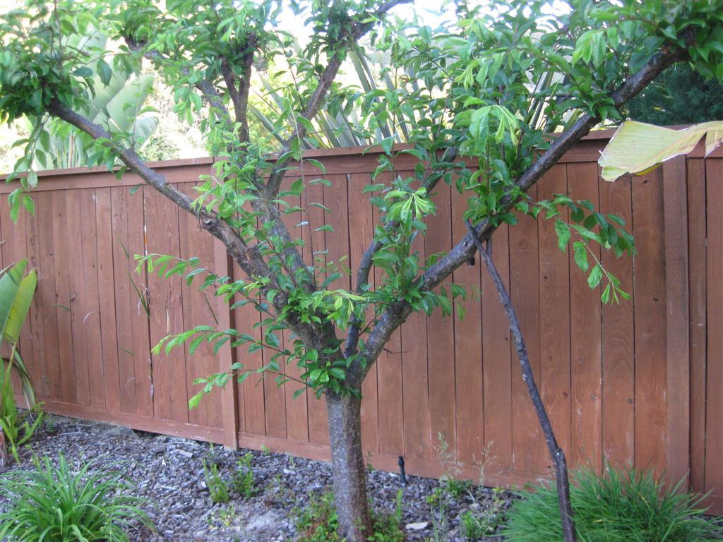 Несоблюдение норм посадки деревьев может стать в будущем причиной конфликтов с соседями