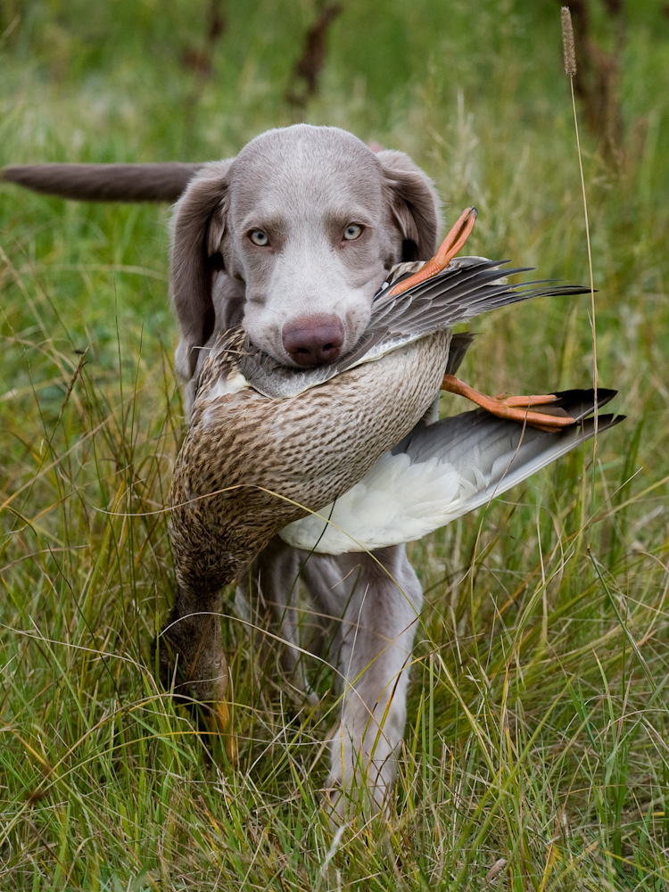 Понятие и виды охоты