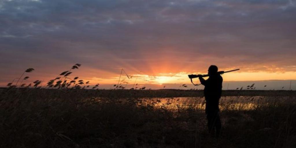 Какие бывают виды охоты