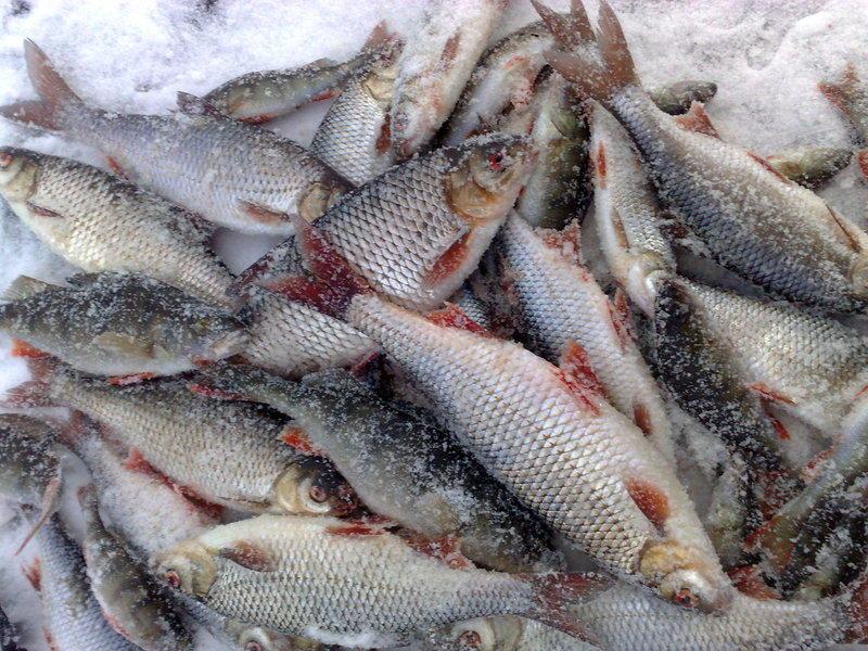Хороший улов рыбы