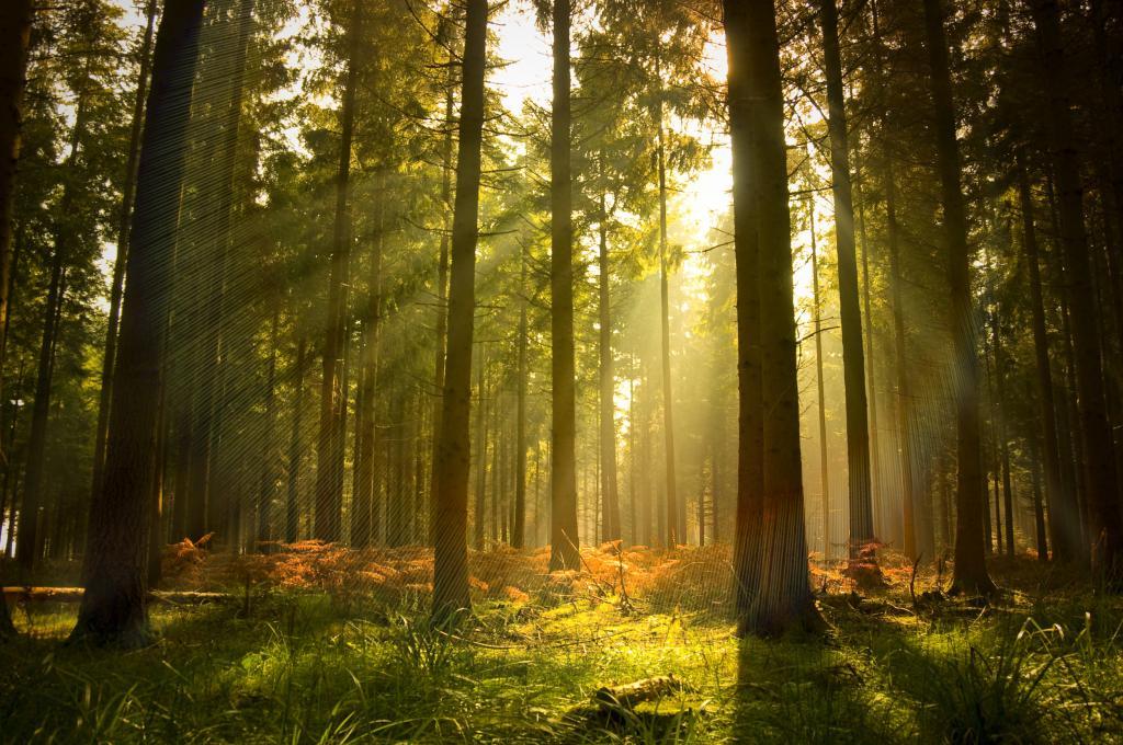земельные участки под лесные угодья