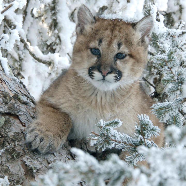 животные холодных стран группа