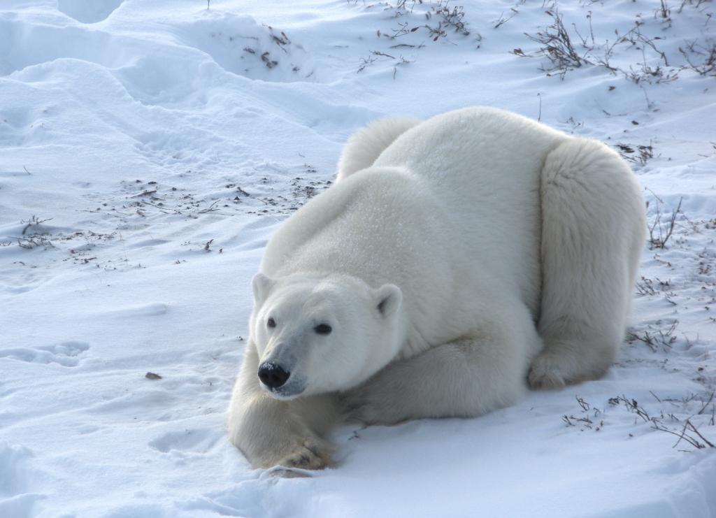 конспект животные холодных стран