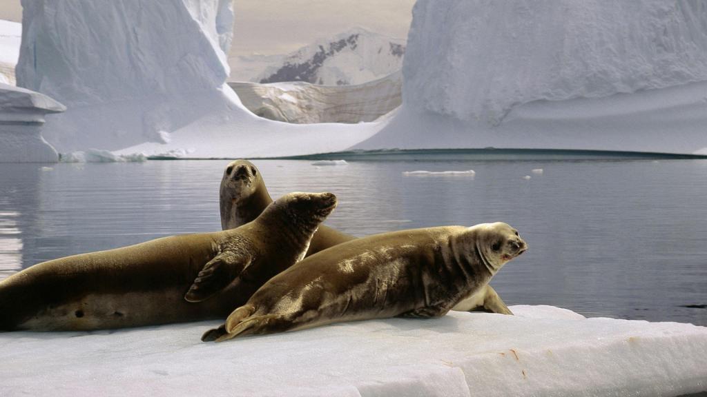 загадки про животных жарких и холодных стран