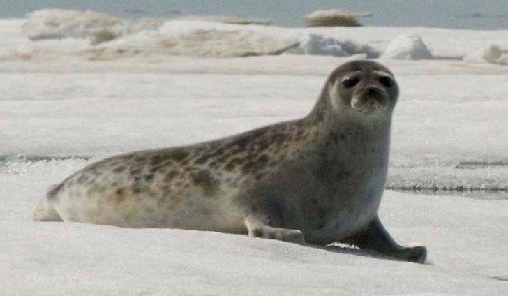дикие животные холодных стран