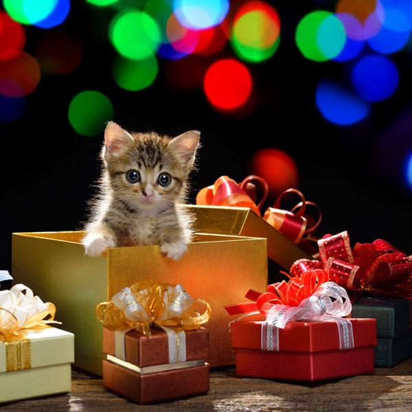 Подарки – проявление душевной щедрости