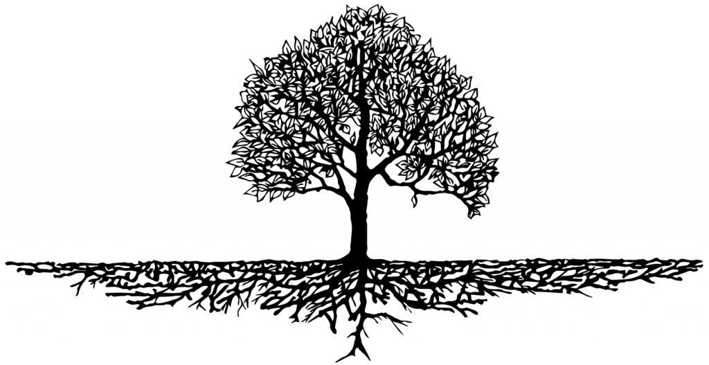 корни, однокоренные слова
