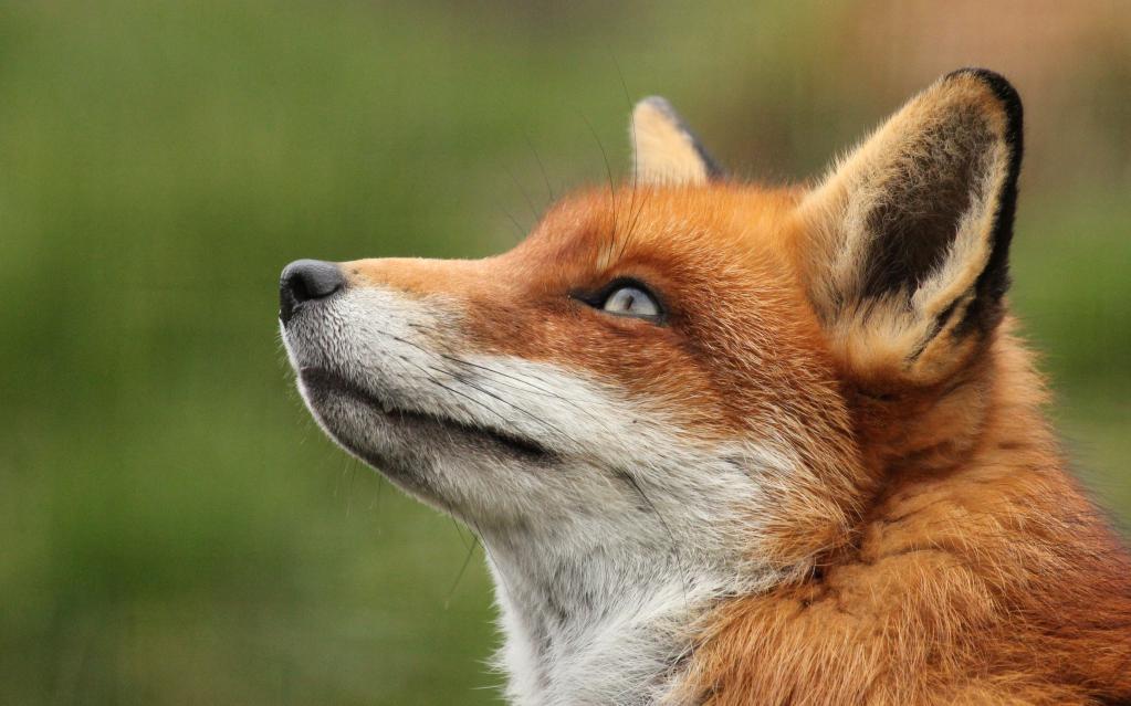 как узнать свое тотемное животное по дате