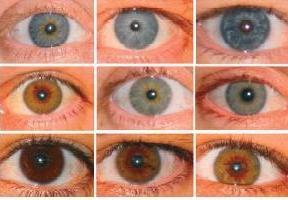 цвет глаз родителей и ребенка
