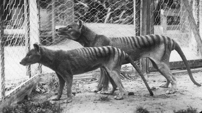 Вымирание животных