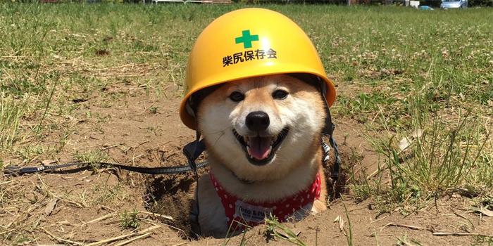 dogecoin как майнить
