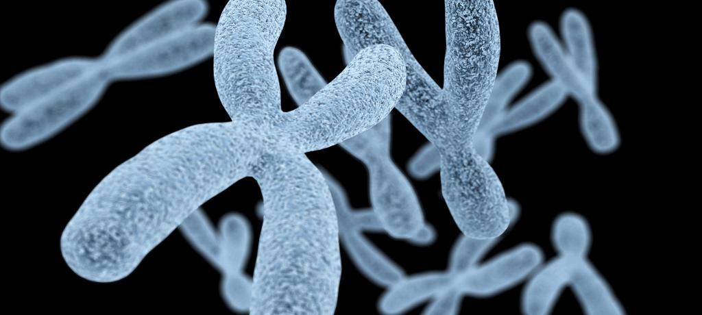 хромосомы негомологичные