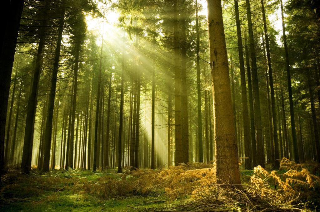 Лес - легкие планеты