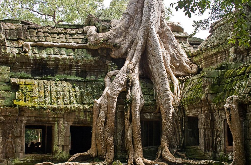 Интересные загадки про корень растений