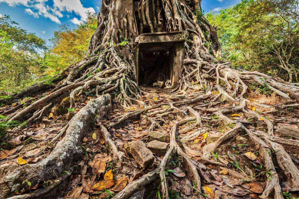 Загадки про корень дерева для школьников