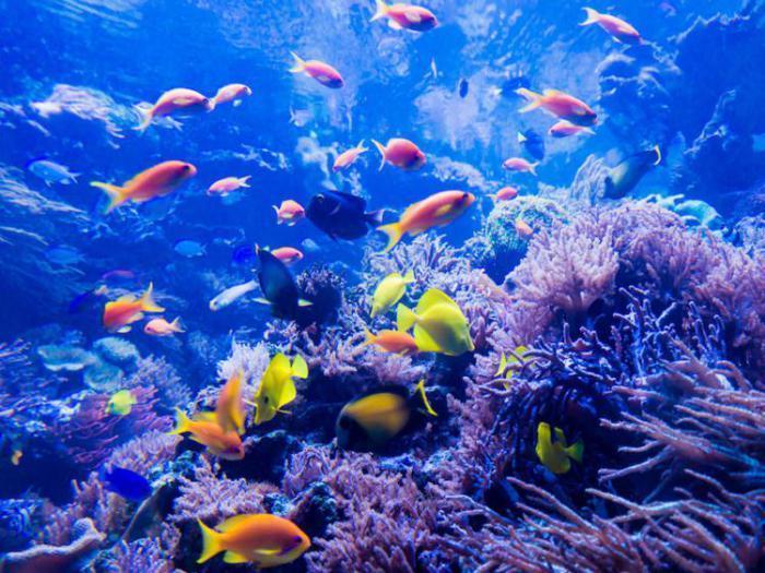 великолепные коралловые рифы