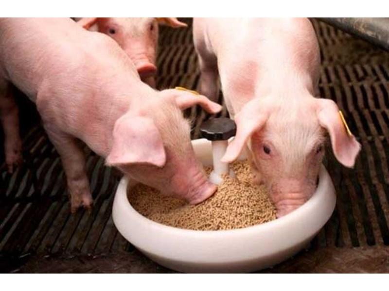 Виды комбикормов для свиней