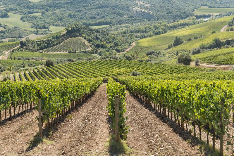 Терруар вина Брунелло ди Монтальчино