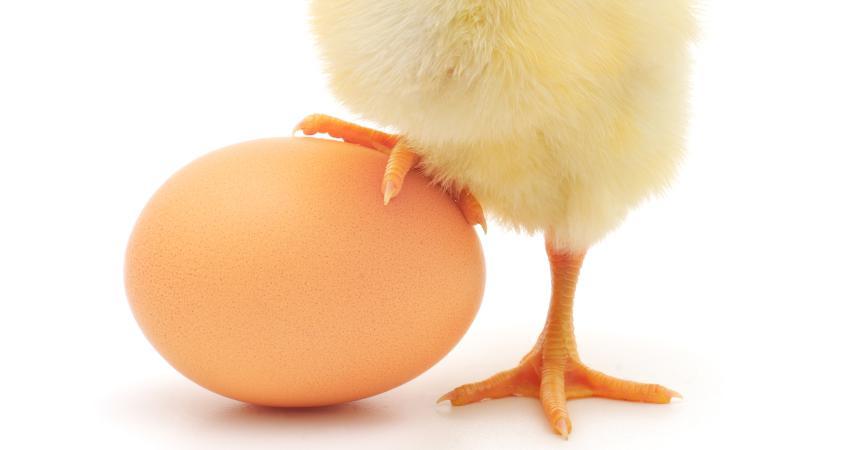 Попрыгун из куриного яйца