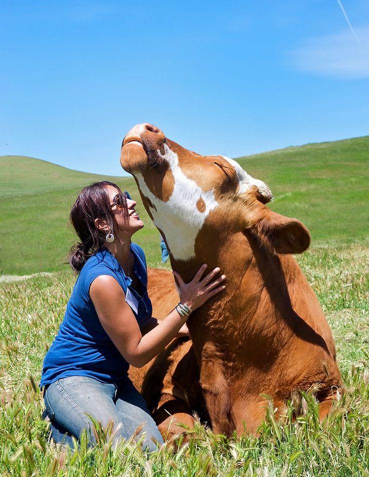 Корова с хозяйкой